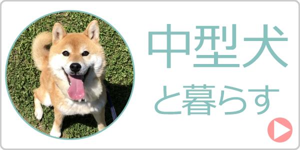 中型犬と暮らす