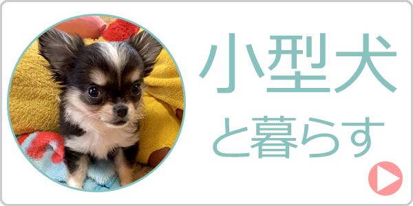 小型犬と暮らす